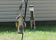 at the feeders by the air conditioner