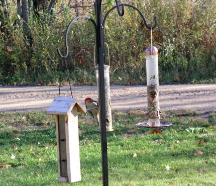 on the outer feeder, Monday, October 17, 2005
