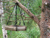 a Chickadee at the front feeder station